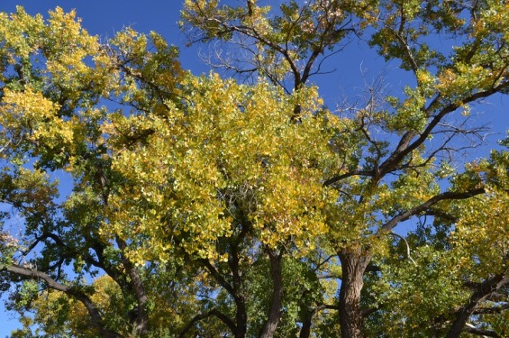 cottonwood-fall_med_hr-2