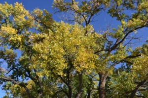 cottonwood-fall_med_hr