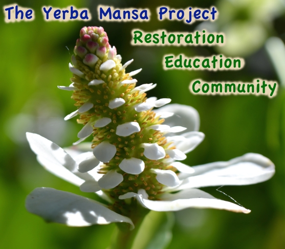 Yerba Mansa Project Flyer general info_Display cropped