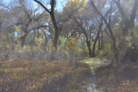 Bosque Yerba Mansa Autumn Light